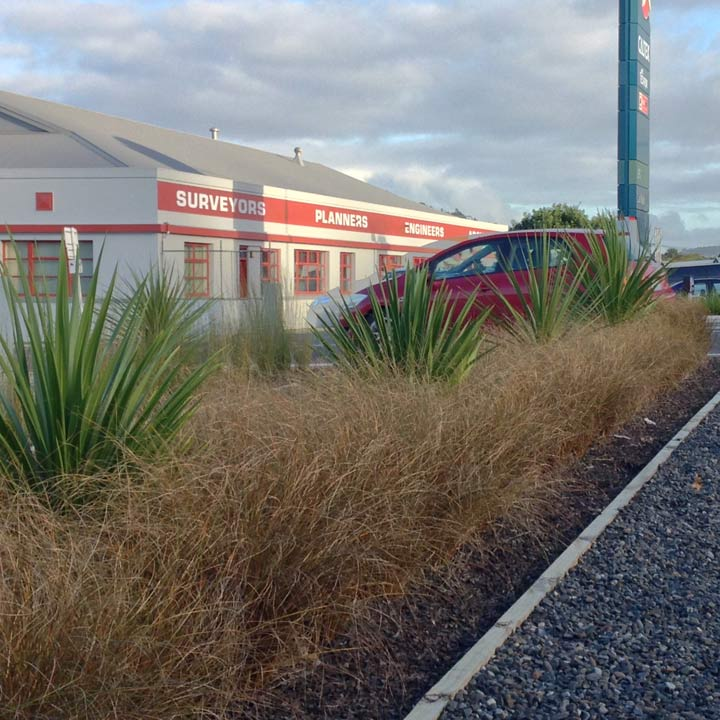 Streetscape planting at the State Highway 1 - Selwyn Avenue junction, Whangarei